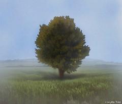 El Arbol y La Niebla (gusdiaz) Tags: beautiful field grass fog arbol foggy neblina