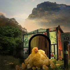 Chicks in the sun (jaci XIII) Tags: house bird chicken landscape galinha paisagem ave chicks casinha pintinhos