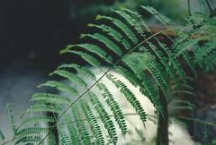 Raíces (Pau Barr) Tags: trees film nature vintage arbol woods nikon bosque jacaranda analogica n65 marchiquita