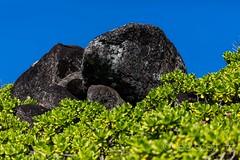 4X0A6011 (lee scott ) Tags: macro nature outdoors island happy hawaii calming walkabout kauai hawaiian tropical handheld leescott islandlife feelgood 100mmmacro moloaa islandview walkonthebeach rightsmanaged goodfeelings sponataneous spontaneousmoments lightsourcephotographybyleescott