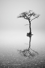 Loch Lomond Mist (hmbautista) Tags: mist lake reflection tree water misty fog landscape photography bay long exposure alone foggy scottish peaceful calm single mysterious lone loch minimalism rowan lomond trossachs milarrochy