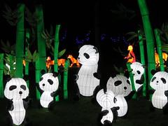 UK - London - Chiswick - Magical Lantern Festival - Pandas (JulesFoto) Tags: uk england london pandas chiswick chineselanterns chiswickpark chiswickhousegardens magicallanternfestival