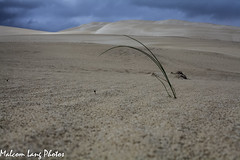 Autumn Lincoln National Park (Malcom Lang) Tags: park blue sky plant rain canon landscape ilovenature sand south ngc australia southern national ag lincoln canon5d storms penninsula southaustralia thunder sandhills eyre southernaustralia canonef50mm