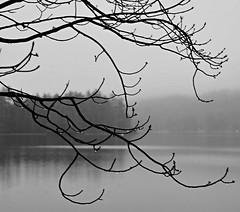 2016_0315Rain&Fog-B&W0001 (maineman152 (Lou)) Tags: winter bw lake nature water rain weather fog landscape march pond maine foggy badweather bwphoto winterweather naturephotography blackandwhitephoto landscapephotography naturephoto westpond landscapephoto
