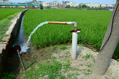 Irrigation Pipe (Bob Hawley) Tags: green water landscape outdoors asia rice farming pipes taiwan villages kaohsiung fields agriculture irrigation paddyfields ditches nikon1755f28 nikond7100 ziguantownship