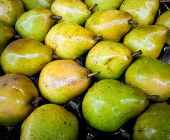 69/366 It's Raining Pears - 366 Project 2 - 2016 (dorsetpeach) Tags: england green wet rain yellow march shine pears dorset pear 365 dorchester raindrop glisten 2016 366 aphotoadayforayear 366project second365project
