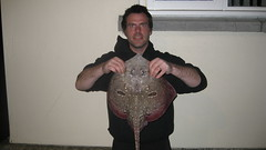 "Ben Male's Thornback Ray of 4lbs 4oz • <a style=""font-size:0.8em;"" href=""http://www.flickr.com/photos/113772263@N05/25943939546/"" target=""_blank"">View on Flickr</a>"