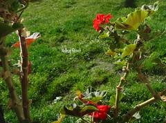 La table de Pâques (Melbeau Siteweb blog) Tags: fleurs table jardin animaux chocolat pâques melbeausiteweb