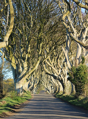 dark hedges67 (seanfderry-studenna) Tags: road county ireland sunset irish mist plant tree nature forest sunrise dark landscape alley outdoor branches tourist northern beech hedges antrim armoy