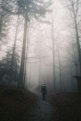 into oblivion (-Mina-) Tags: winter film nature fog analog forest walking schweiz switzerland minolta minoltax700 zurich uetliberg tranquil