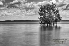 East Point tree (stormgirl1960) Tags: ocean longexposure blackandwhite tree beach water clouds darwin eastpoint northernterritory