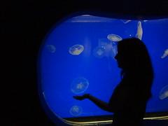 Chicago (Dennis Hinz) Tags: blue silhouette aquarium jellyfish shedd