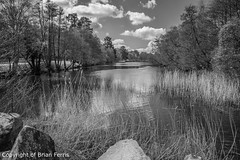 IMGP1093-2 (acornuser) Tags: park trees blackandwhite bw reflection water woodland garden landscape waterfall spring surrey cascade virginiawater blosom sigma1770 pentaxk3