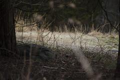Habitat (consolecadet) Tags: trees nature grass woods belmont meadow habitat belmontma massaudubon
