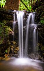 Redwoods Waterfall (FeralWhippet) Tags: california longexposure creek landscape waterfall stream outdoor bayarea hdr redwoodforest naturescene purisimacreekredwoodsopenspacepreserve