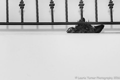 -20160428Miss Maggie1-Edit (Laurie2123) Tags: blackandwhite dog maggie minimalism doc scottie ddc bnw scottishterrier odc maggiemae scottiedog missmaggie nikkor70200mm cmwd cmwdblackandwhite blackscottishterrier blackscottie ourdailychallenge dailydogchallenge nikond800e 52weeksof2016 odc2016