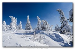 Pb_3098765 (Fernand EECKHOUT) Tags: chien photoshop photography landscapes hiver ngc traces lac olympus adobe neige zuiko paysages omd labresse gerardmer lightroom em1 2016 lalande hohneck lr6 123landscapes inexplore lesvosges 1260swd imagesvoyages poulbeau19