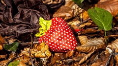 Strawberry Fields Forever (L I C H T B I L D E R) Tags: park trash forest strawberry wald mll erdbeere