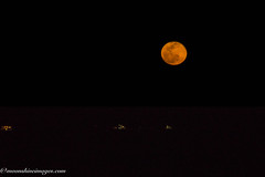 DSC07547-Edit.jpg (rdking647) Tags: ocean gulfofmexico night fullmoon moonrise