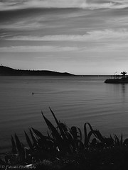 Alone (Paterdimakis) Tags: ocean travel sea sky people cloud white seascape black nature water beauty swimming landscape grey one coast blackwhite alone greece human winder vouliagmeni blackwhitephotos