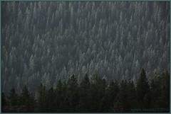 unique, every one (zawaski) Tags: moon canada calgary beauty trek ambientlight noflash helicopter alberta threesisters rockymountains canmore canonefs18200mmf3556is zawaski2016 snowjoshsorchid