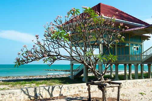 Frangipani flower side the sea.