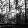 Sun star (SopheNic (DavidSenaPhoto)) Tags: trees blackandwhite bw sun monochrome shadows iso400 35mmfilm hp5 ilford 50mmf18 selfdeveloped id1111 canonelan7e