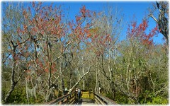 Sawgrass Lake Park - St Petersburg, Florida (lagergrenjan) Tags: park lake st florida petersburg boardwalk sawgrass
