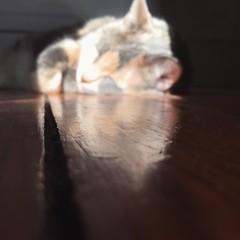 Saturday sun (Andrea Kang) Tags: sun cat nap kitty catnap sleepy dorian instagram ifttt