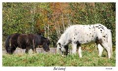Aus dem Archiv (317) (ritsch48) Tags: pferde badlostorf