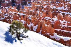 That tree has a nice view... (Starrgalla) Tags: trees snow cold tree ice nature beauty rock pinetree pine utah rocks canyon formation hoodoo bryce chilly brycecanyon naturalbeauty hoodoos geological thattreehasaniceview