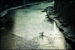 final clearance sale (TheOtherPerspective78) Tags: vienna wien urban abandoned water backlight canon river shopping flow riverside trolley ripples kanal cart fluss einkaufswagen stadtpark verlassen wasteland gegenlicht wienfluss ef100400l theotherperspective78