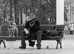 The guardian (Andy WXx2009) Tags: city portrait urban blackandwhite dog pet man monochrome hat bench beard outdoors spain europe sitting artistic candid streetphotography canine espana palmtrees bags cartagena tramp costablanca