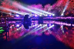 Formosan Aboriginal Culture Village (Vincent_Ting) Tags: clouds reflections cherry bokeh taiwan nightscene  lasershow  sunmoonlake  nantou      formosanaboriginalculturevillage       vincentting