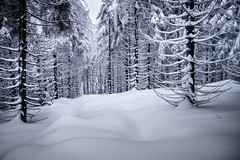 Trees snow and cold (Goddl) Tags: schnee trees winter snow cold landscape outdoor landschaft bume klte