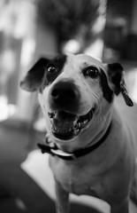 _MG_1489 (seandavidreed2016) Tags: blackandwhite dog cat