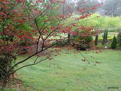 Wildwood Gardens Bilpin (pat.bluey) Tags: bilpingardens newsouthwales australia wildwoodgardens 1001nights 1001nightsmagiccity