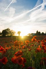 DSC04613 (wheelsy1) Tags: walking derbyshire poppy chesterfield sheepbridge poppyfield unstone richardwiles