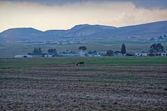 Israel! (Hemo Kerem) Tags: horse israel village smoke exploring alpha bedouin arad a7rii a7rm2 goatssheepherd bedouinvillagescanonfd200mmf4200mmcanonfdmanualfocusmfcanonfdsonysonya7rm2
