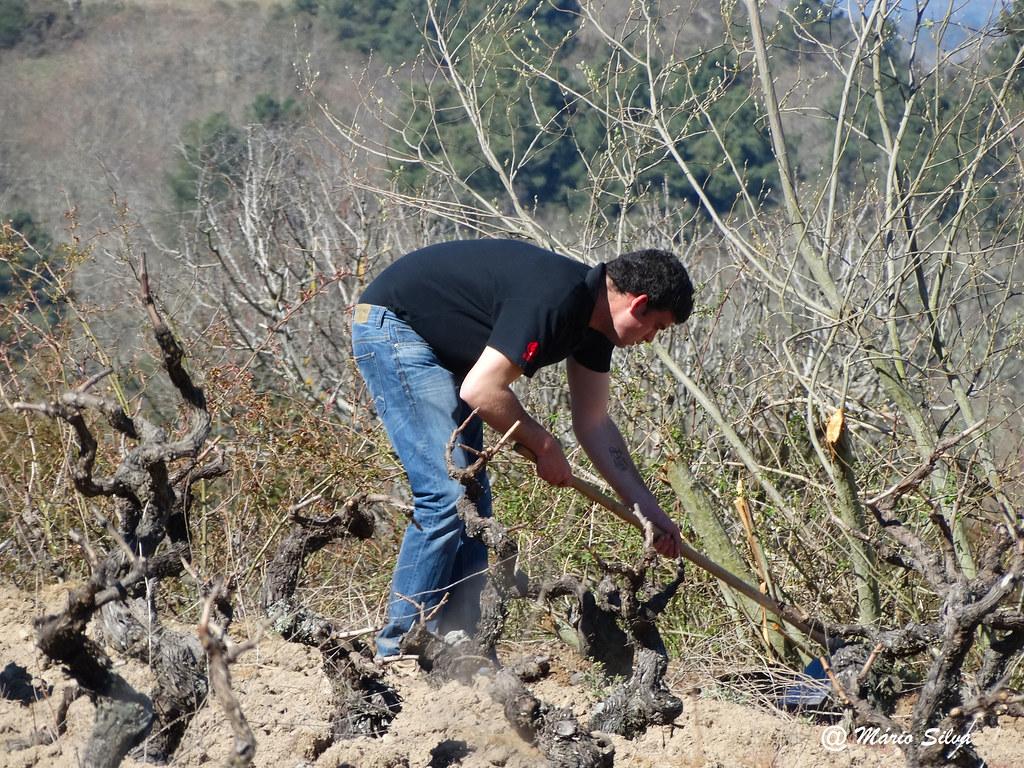 Águas Frias (Chaves) - ... cavando a vinha ...