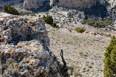 LBF_0075 (clyspe) Tags: cliff mountain tree river landscape montana rocks desert 4x4 outdoor canyon badlands wyoming scrub offroading xterra scrublands bighorncanyon