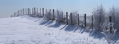 Frosty fenceline (virgil martin) Tags: winter panorama snow ontario canada fence landscape frost hoarfrost gimp wellesleytownship waterlooregion microsoftice oloneo olympusomdem5