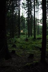 20150717-DSC_1307 (Diahi) Tags: nature finland vuosaari 2015 uutela d7200