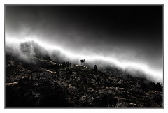 from hell (kurtwolf303) Tags: trees portugal topf25 fog dark landscape island topf50 topf75 500v20f insel topf150 landschaft topf100 bume madeira dunkel 800views omd digitalphotography lightshadows lichtschatten 900views 750views 1000v40f 250v10f systemcamera unlimitedphotos micro43 microfourthirds olympusem1 artbwbtra kurtwolf303