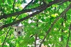 In the shade (Roxana Turcios) Tags: bird nature animals birdhouse greentree