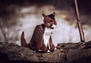 Sitting Origami Cat (FoldedWilderness) Tags: cat paper origami craft kawahata fumiaki