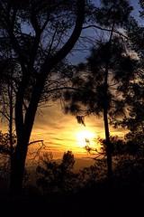 'Hidden Sunset...' (MABworks) Tags: life california city sunset naturaleza sun nature landscape evening losangeles arboles natural hiking live natureza citylife sunny hike observatory hiker griffithpark sunsetting cityviews naturephotography natureshots naturelover griffithparkobservatory naturelove naturephotos sunsethike naturepics hikingphotos photographylover hikingfun hikingphotography photographyenthusiast hikinglife hikinglove