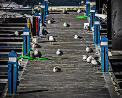 Pantaln Bronx (Ignacio M. Jimnez) Tags: espaa puerto dock spain seagull huelva andalucia andalusia gaviotas pantalan puntaumbria