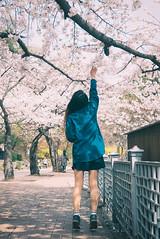 경기도청 벚꽃축제 2016 (Photolobe!) Tags: leica portrait girl korea dlux suwon 수원 인물 벚꽃축제 인물사진 팔달산 경기도청 남효진 경기도청벚꽃축제
