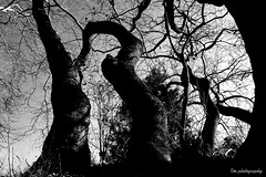 Dark forest (vasia.miliou) Tags: camera trees blackandwhite white plant black tree nature monochrome beautiful forest dark photography scary woods outdoor greece bnw